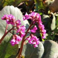 Розовые цветочки. :: Анастасия Глезерис