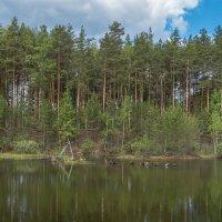 на лесном озере :: Сергей Цветков