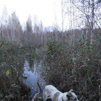 Лесное озеро :: Валерий Конев