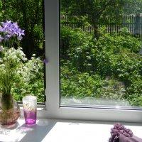 Окно в июнь :: Ольга