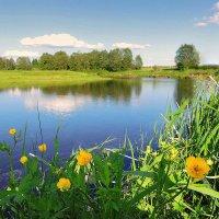 Цветут купавки по берегам Тверцы :: Павлова Татьяна Павлова