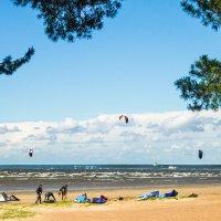 На заливе ветренно :: Виталий