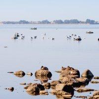 На заливе тишина :: Виталий