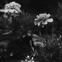 серый мир :: Gor Mkrtchyan