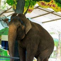 Северные острова в заливе Няфу. Остров Орхидей. Шоу слонов. :: Виктор Куприянов