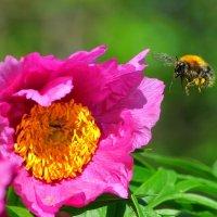 лакомый цветок :: vg154