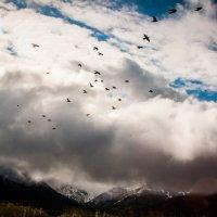 Горы, птицы, облака :: Антон Тихомиров