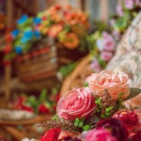 Розы :: Андрей Володин