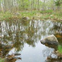 в весеннем лесу :: liudmila drake