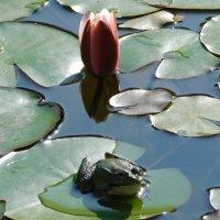Царевна-лягушка :: Дарья Fox