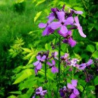 Весенный цветок :: анатолий томас