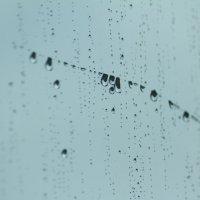 ритм дождя :: Надежда Кунилова