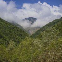 Зеленое ущелье :: Андрей Исаев