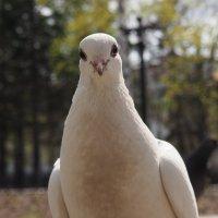 Птица мира :: Kharlo Landersn