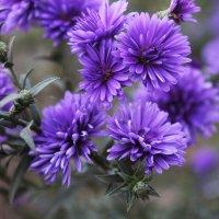 flowers :: Алиме Исмаилова