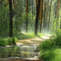 Пролился первый летний дождь... :: Лесо-Вед (Баранов)