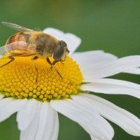 Я люблю тебя цветочек :: Олег