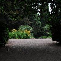 В ялтинском ботаническом саду :: Игорь Сорокин