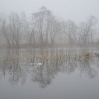 туман :: tatiana lanskaya