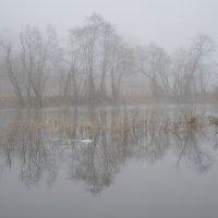 туман и половодье :: tatiana lanskaya