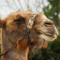 Верблюд - птица гордая  :: Татьяна Черёмухина