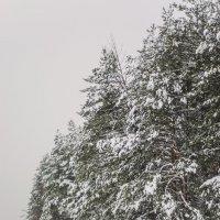 однажды зимой :: Василий Либко