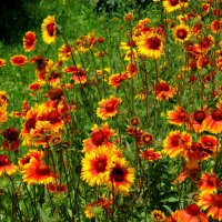 Лето красное :: Нина Бутко