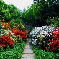 Цветы в лесопарке :: Nina Yudicheva