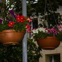 цветы :: Артём Бояринцев