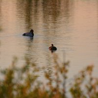 пруд при закате :: linnud
