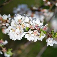 Весна :: Totono Dvorov