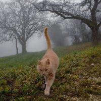 и только кошка гуляет сама по себе... :: Elena Wymann
