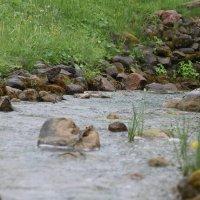 маленькая река :: ОЛЕГ Корроль