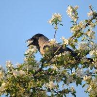 Серая ворона в саду :: Сергей Стреляный