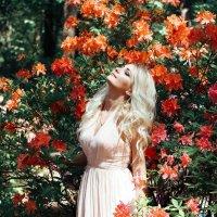 Flowers :: Sandra Snow
