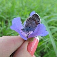 Бабочка в руке :: Татьяна Вострикова