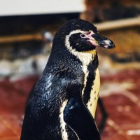 Пингвин :: Vitalij P