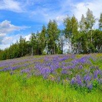 Цветущий холм :: Милешкин Владимир Алексеевич