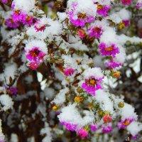 Зимние цветы :: Ильдар Шангараев