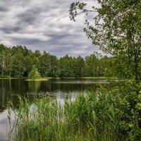 Лесное озеро 2 :: Андрей Дворников