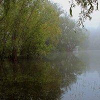 Утро туманное .... :: Alexander Andronik