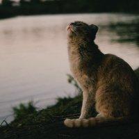 Котейка ждет свою рыбку) :: Сергей Алексеев