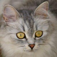 моя котэ :: Иннокентий Авдонин