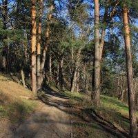 Лес на берегу реки Осовец :: Николай Масляев
