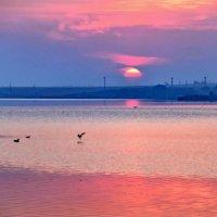 Розовый восход :: Ольга Голубева