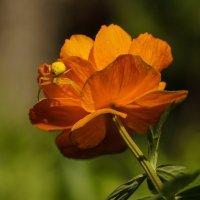 Аленький-цветок и его хозяин :: Олег Мартоник