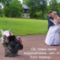 Ну, как дети, ей Богу..... :: Tatiana Markova