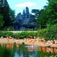 Там, где живут  страусы и фламинго :: Nina Yudicheva