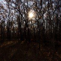 Закат в лесу :: Мария Букина