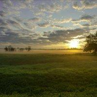 На восходе среди лугов клязьминской поймы. :: Igor Andreev